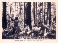 압록강 상류 벌목 장면