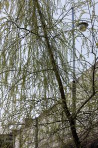 나뭇가지와 어린잎