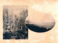 백두산 삼림