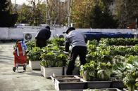 옥상 텃밭에서 배추를 수확하는 주민들과 관리사무소 직원들