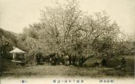 우이동 벚꽃놀이