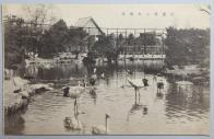 창경원 동물원의 대수금실(大水禽室)
