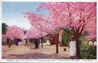 장충단공원 벚꽃