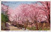 남산 앵곡의 벚꽃