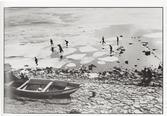뚝섬유원지(1957)