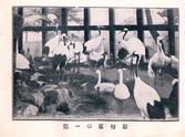 창경원 동물원 수금사